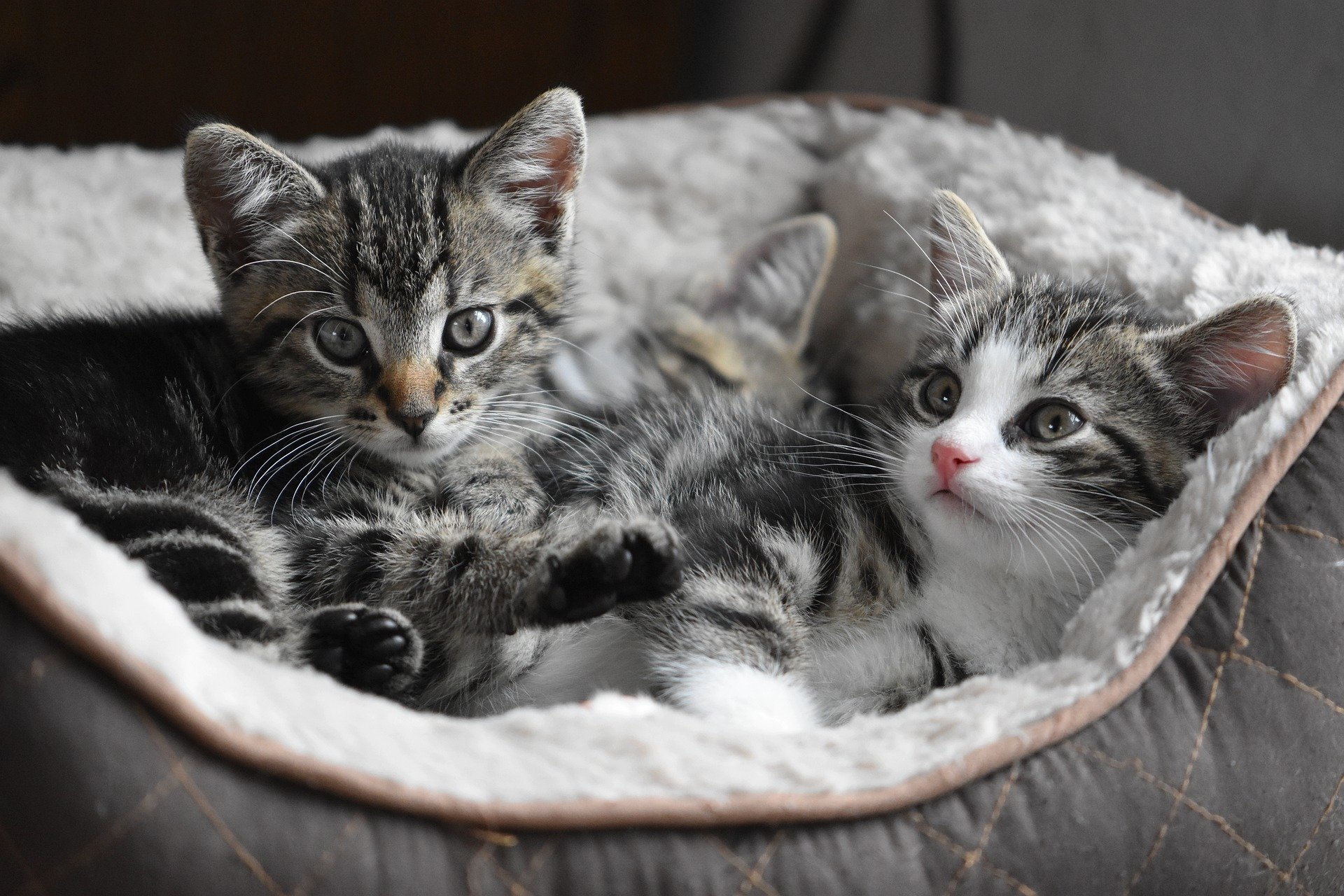 Dependants in your will cats